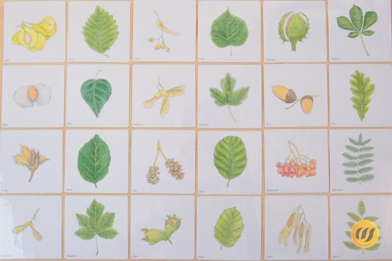 Herbarium Blätter blättermemory 12 blätter 12 früchte wunderwerkstatt