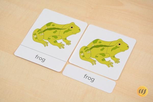 Nomenklaturkarten frosch wunderwerkstatt - Frosch englisch ...